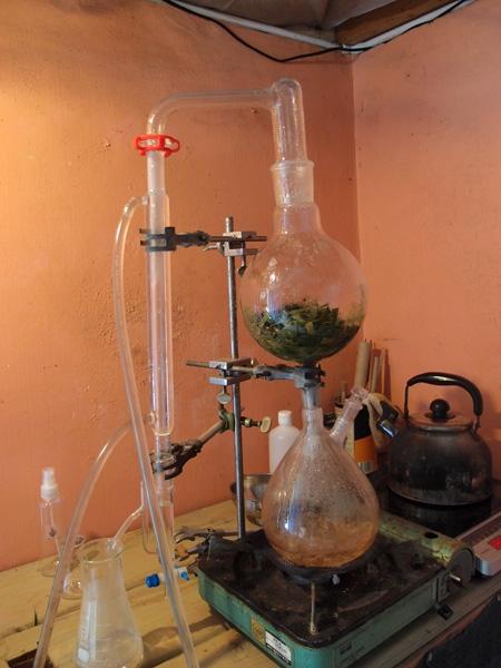 一滴一滴、月桃の香りを含んだ蒸留水が出来上がります