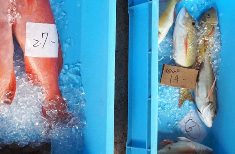 八重山漁協直送の地魚等を