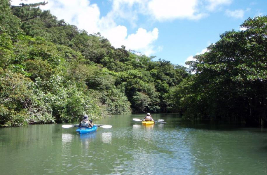 大自然をカヌーでのんびりと。より近くにマングローブを感じられます。