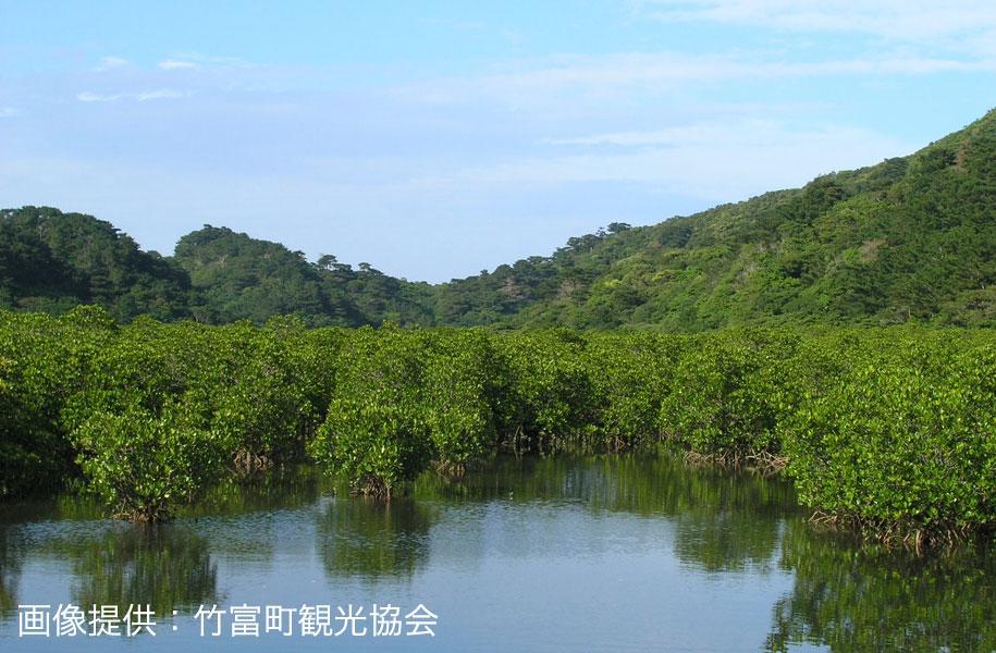 大自然広がる西表島。海水と淡水が混ざり合う汽水域にマングローブが広がります