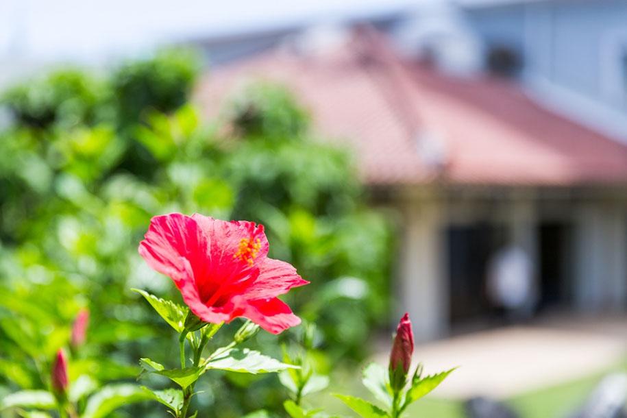 南国石垣島は3月21日に「海びらき」します!