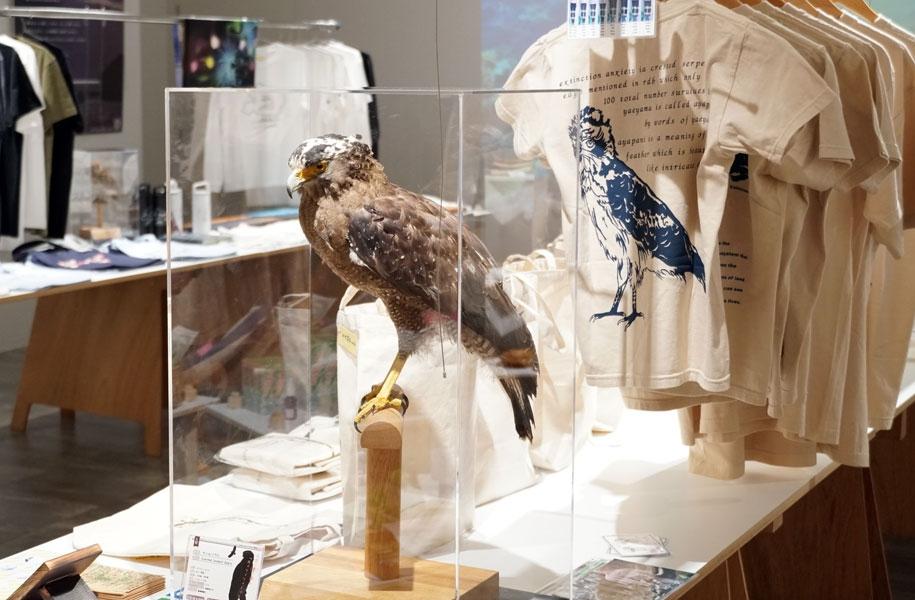 ギャラリーの各所に八重山の動物たちの剥製を展示。間近でじっくり見ることができます。