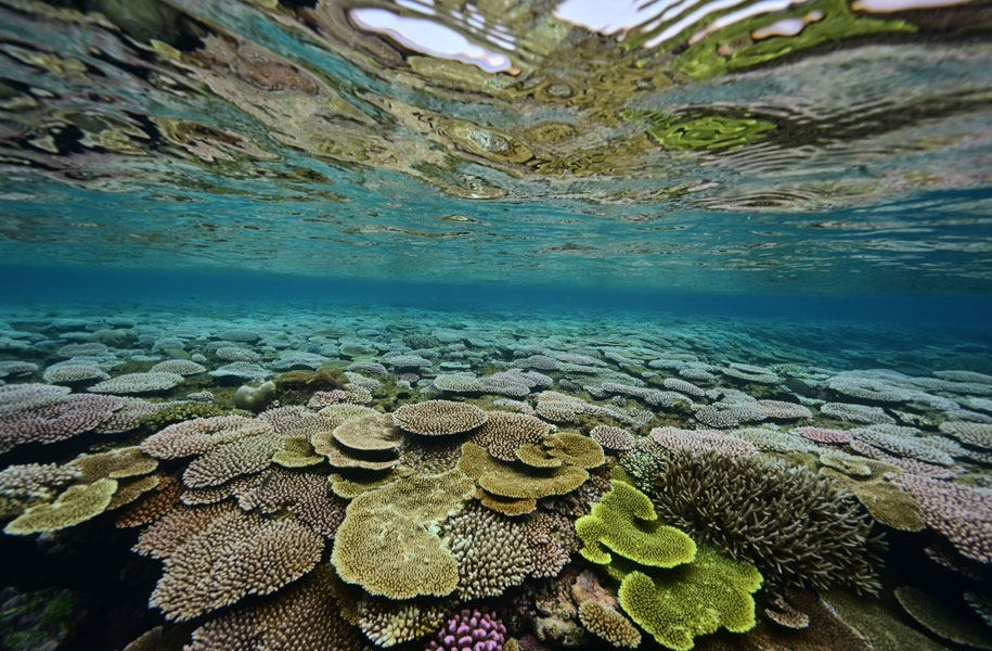 石垣島との間にある石西礁湖は日本最大の珊瑚礁海域です