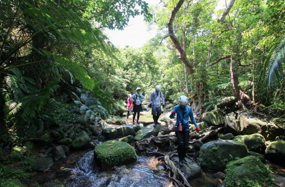 トレッキングで亜熱帯の森で森林浴を。空気も美味しい!