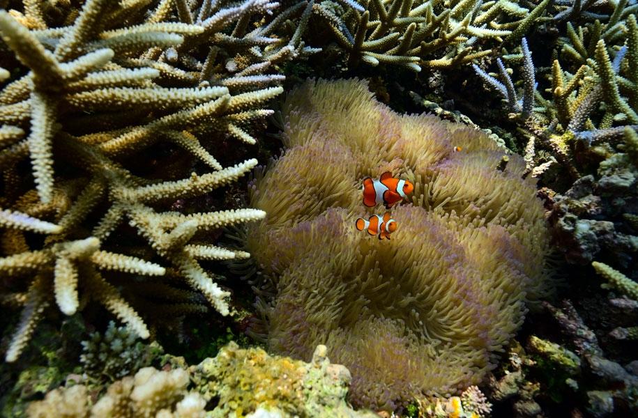 海の中にも多様な生物が生息
