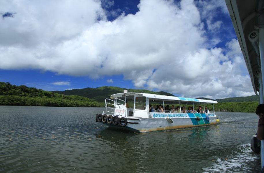 船でマングローブの川を楽しむツアーなら体力に自信のない方でも安心