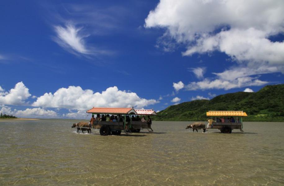 水牛車に乗って近くの由布島(ゆぶじま)へ行くツアーも人気です
