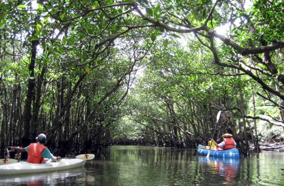 マイナスイオンたっぷり♪仲間川マングローブでカヌー体験