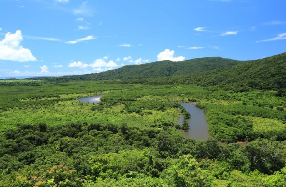 雄大な亜熱帯の森が広がる仲間川流域
